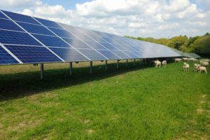 green gras with sheep and a large row of solarpanels, 4 panels high.